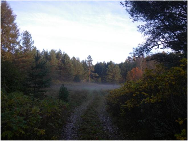 Ltvn trail