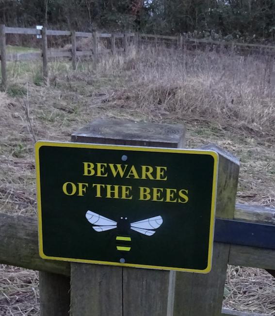 20 Com orch bees
