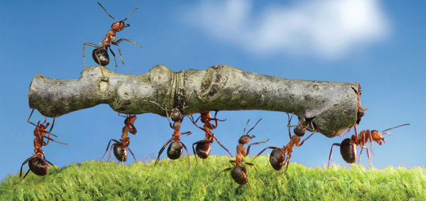 1st pic-ants